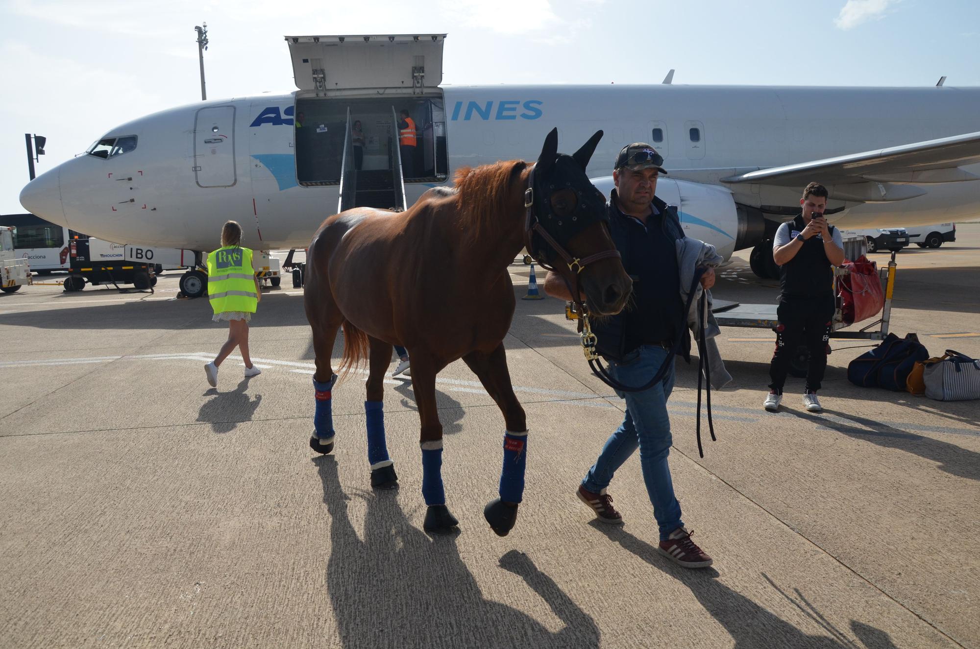 La tropa gala del 'Tour Europeo' aterriza en Palma
