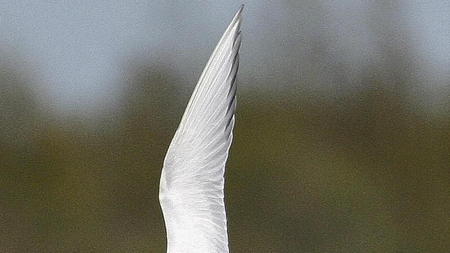 El PP tropieza con los pájaros