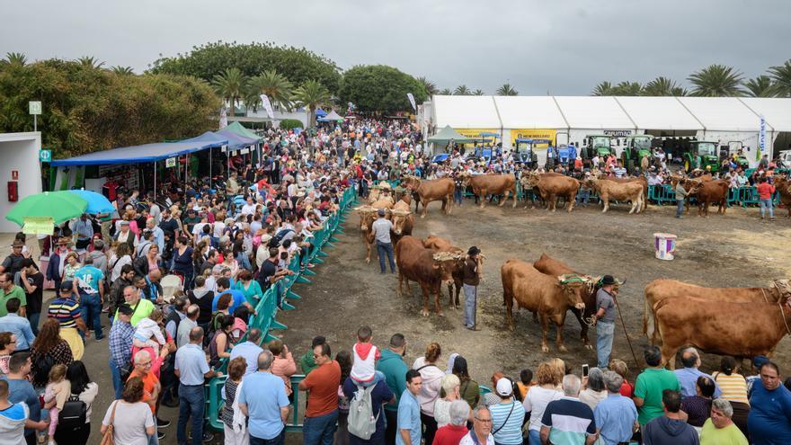 La feria y el concurso virtual de ganado reúne este sábado a 900 animales
