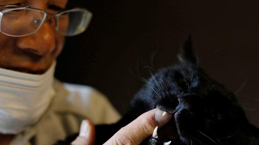 L'home que cuidava els gats de Fukushima