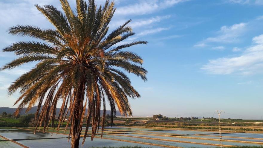 Calasparra, donde el arroz encuentra su paraíso