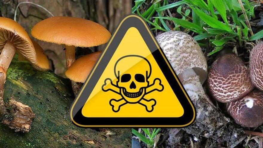 Listado de setas tóxicas a tener en cuenta en Castellón
