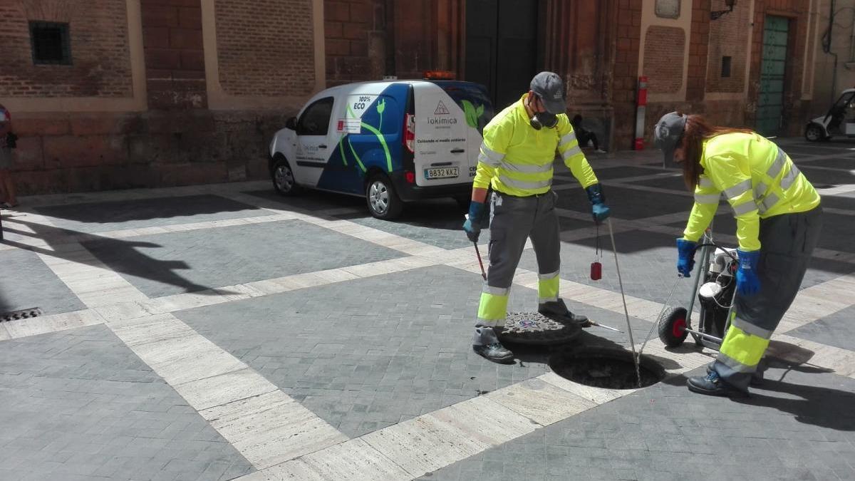 La desinfección contra cucarachas continúa en el casco urbano de Murcia