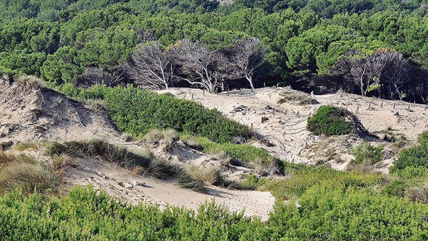 So geht Dünenschutz auf Mallorca
