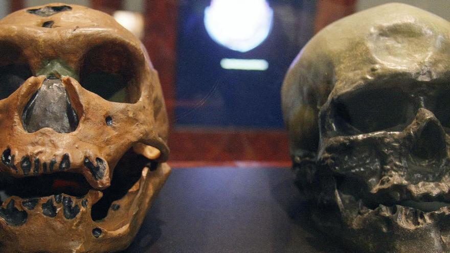 Los neandertales, hermanos directos de los homo sapiens