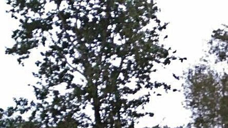 Cambre señala que la tala junto al embalse de Cecebre es por el plan Life Fluvial