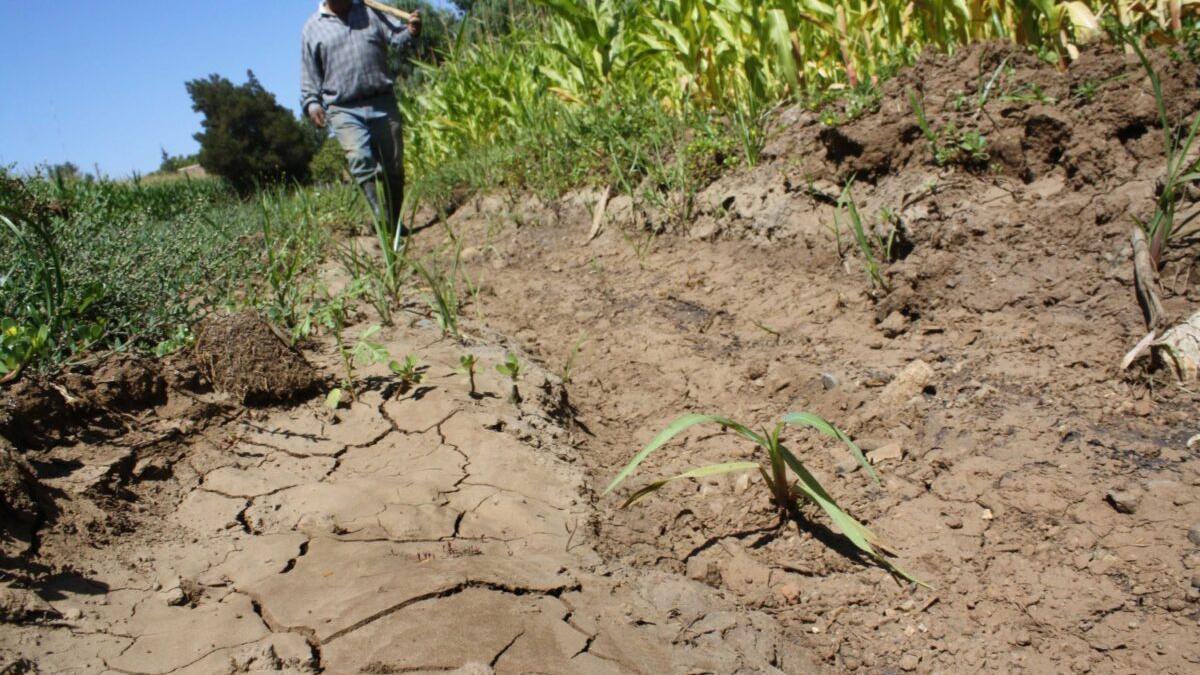 La producción mundial de alimentos puede caer un tercio por el cambio climático
