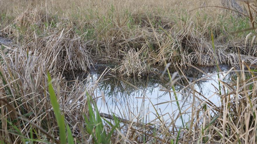 El Consorcio del riu Millars recupera el ecosistema de la Gola Norte
