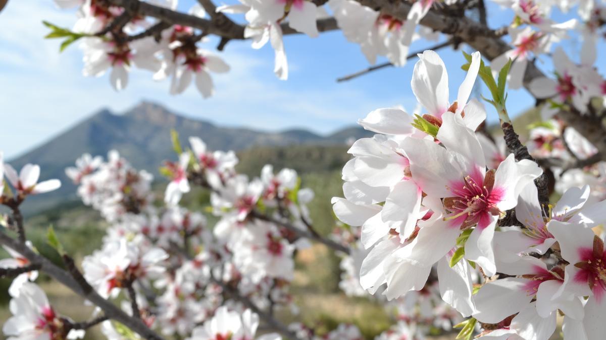 Senda de los almendros en flor