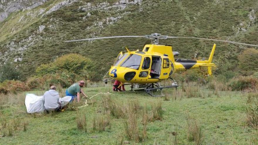 """Rescatan en helicóptero a """"Gallarda"""", una xata con una pata rota en los Picos"""