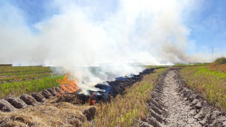 Alarma en València al confundir la paja del arroz con un incendio