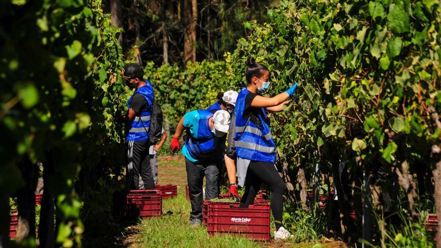 La misión (casi) imposible de producir albariño ecológico en Rías Baixas