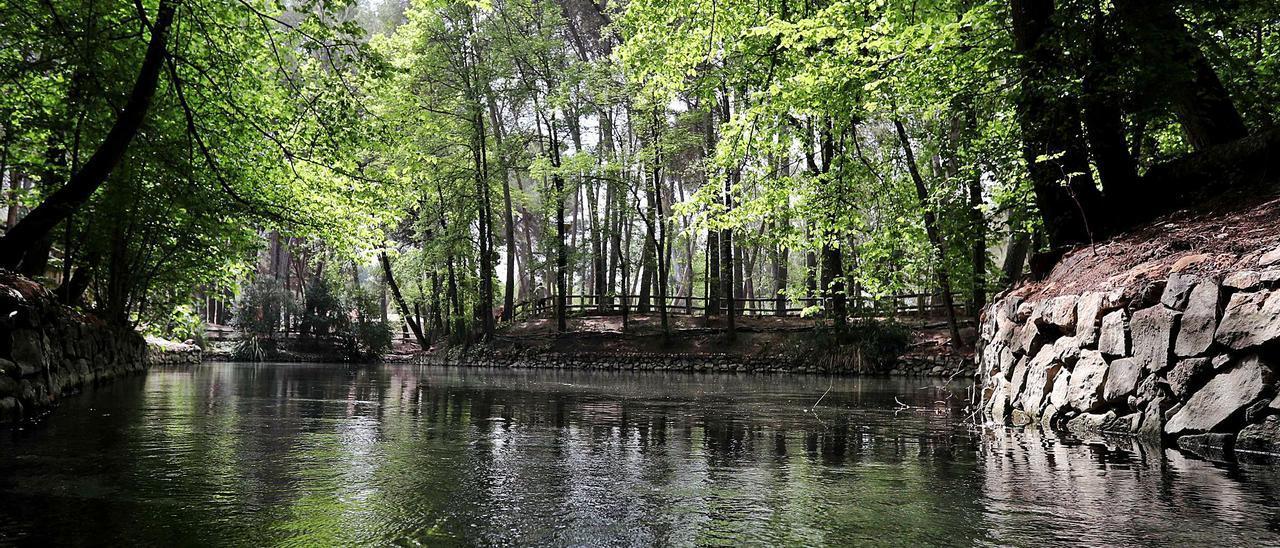 Bosque de pinos y  merendero donde pasar  el día. A la izquierda,  ánades reales junto al  agua.    F. CALABUIG