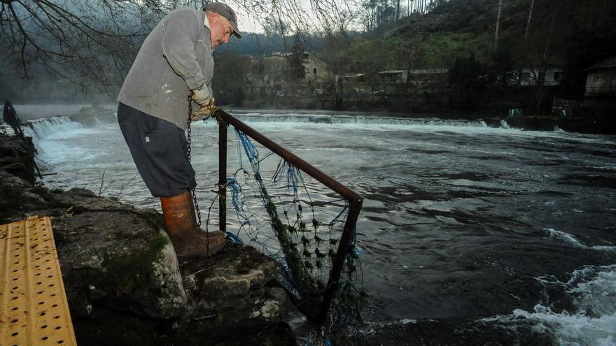 """El exagerado caudal del río Ulla impide capturar lamprea en las """"pesqueiras"""" romanas"""