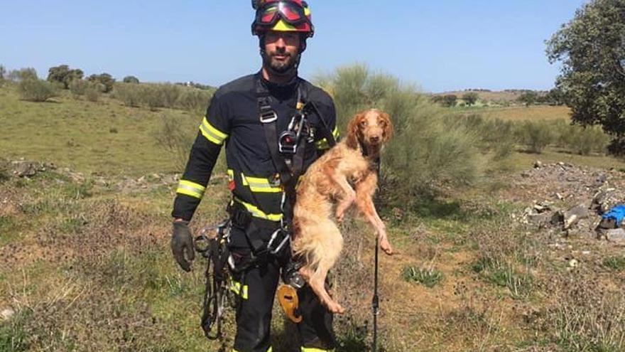 Descubren una fosa utilizada para acabar con la vida de perros en Torrecampo