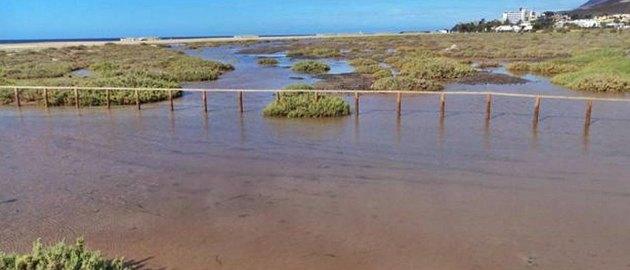 Panorámica del Saladar de Jandía, ubicado en Morro Jable, que está catalogado como uno de los humedales más importantes del mundo. | | LP/DLP