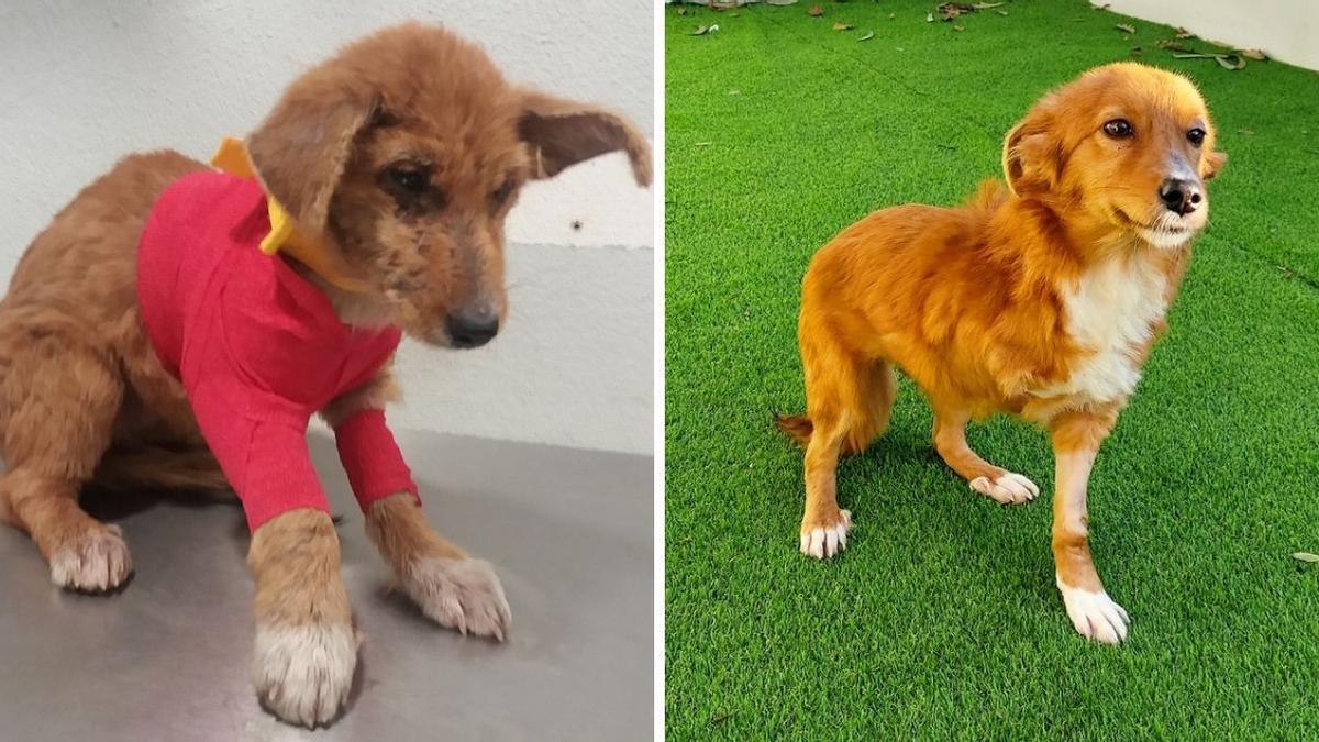 Muti antes y después de la adopción