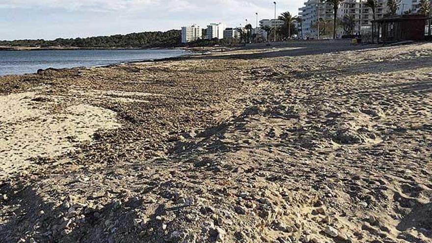 Cala Millor apuesta por rehabilitar la playa con arena de excavaciones