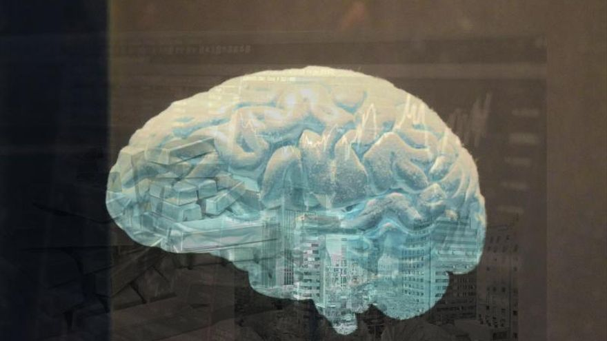 Así es el cerebro inversor