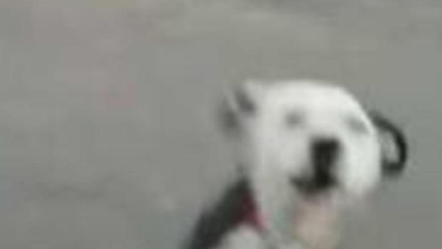 """El pueblo de Tao, """"aterrorizado"""" por un perro"""