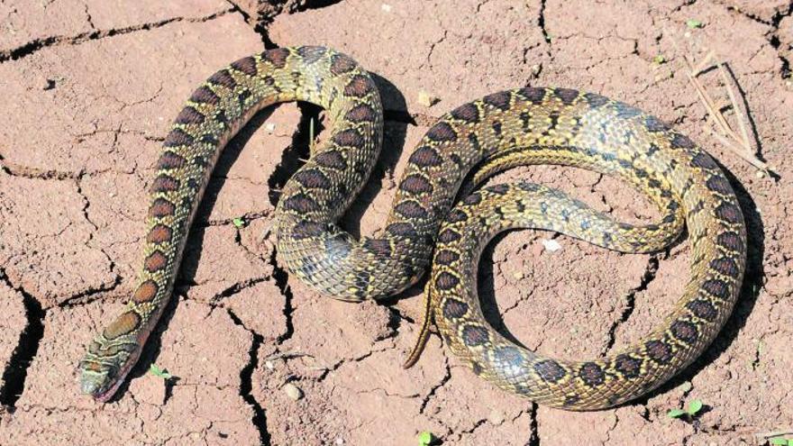 Aquellas serpientes de verano