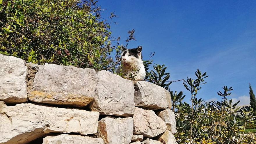 Vida de gato... en Dalt Vila