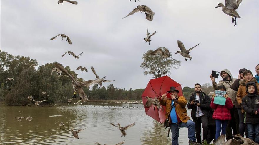 Almassora cataloga 145 especies de aves en el paraje de la desembocadura del Millars