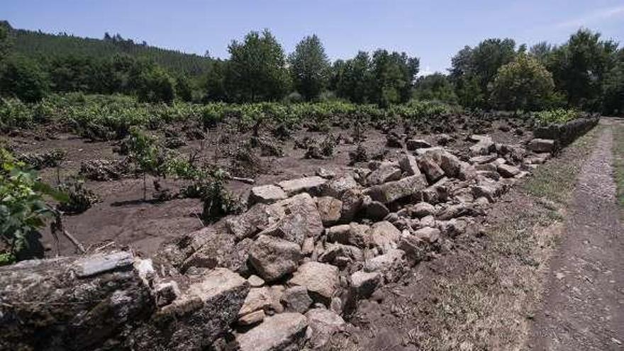 """El temporal afectó solo al 5% de las 570 hectáreas de viñedo de la DO Monterrei: """"Fue un susto"""""""