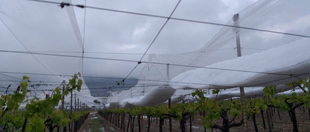 El granizo se acumula en las mallas que protegen a las plantaciones de uva de mesa.