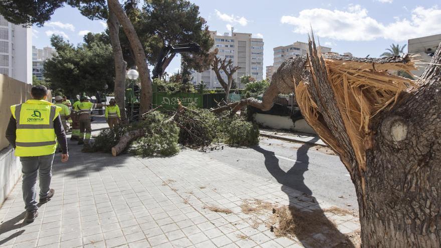 El Ayuntamiento reabre parques y jardines tras acabar la alerta por viento