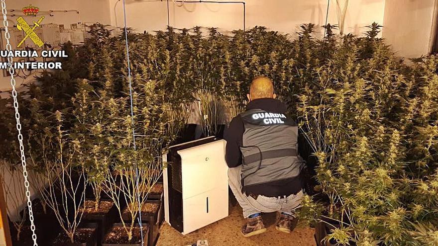 Cuatro detenidos por cultivar y vender marihuana al menudeo