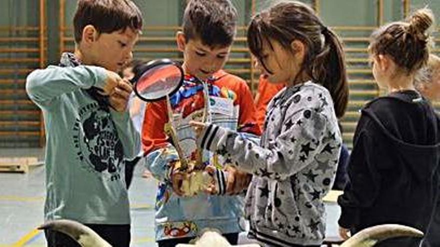 El Lab itinerant ha acostat aquest curs la ciència a 6.000 infants