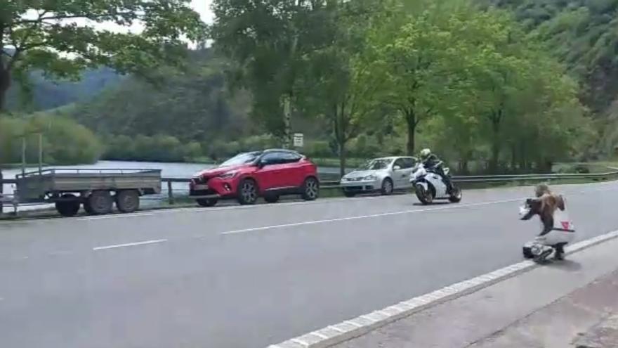Imputan conducción temeraria a un motorista corverano de 25 años grabado a toda velocidad en una carretera de Tineo