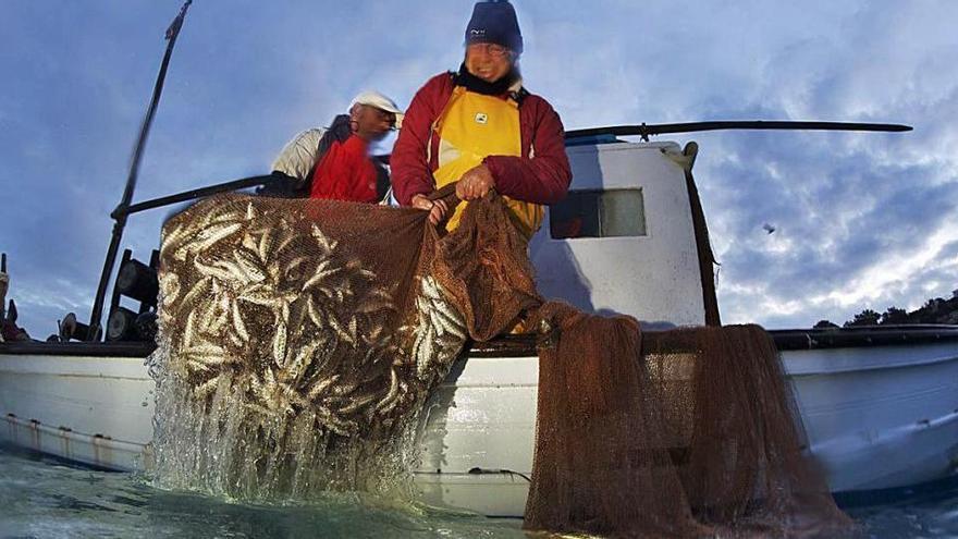 La pesca de 'gerret' se dispara esta temporada en Ibiza