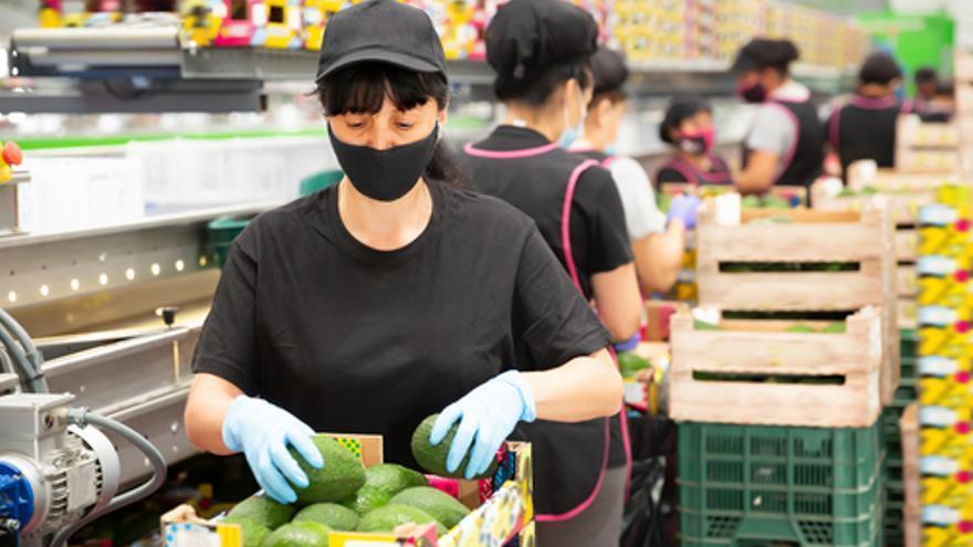 Ofertas de empleo en Málaga: Se buscan 500 mozos de almacén y envasadores para la campaña del mango y el aguacate