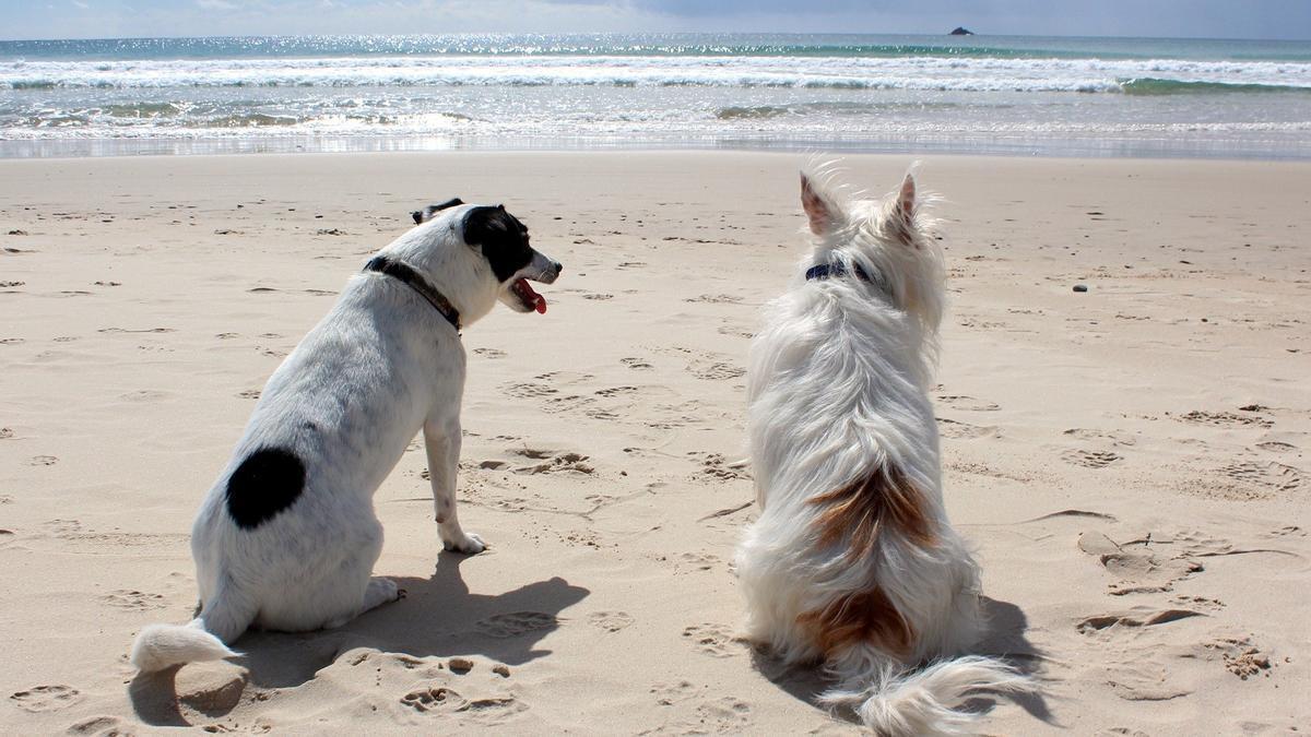 Los perros, bien recibidos durante todo el año en pocas playas de la provincia de Castellón a día de hoy.