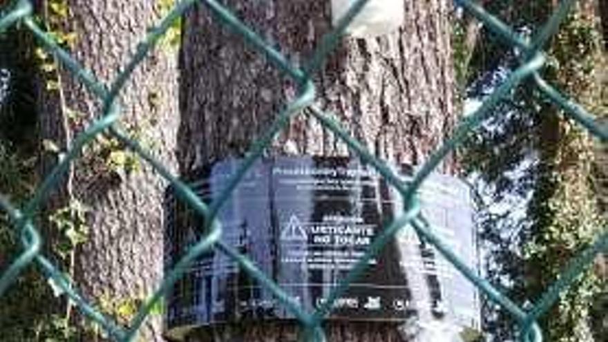 Nuevas medidas para atajar la plaga de procesionaria en el pinar de La Colonia