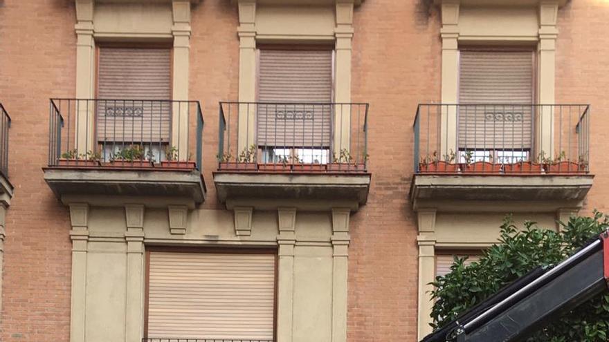 El Ayuntamiento tala dos jacarandas de la plaza Santa Catalina