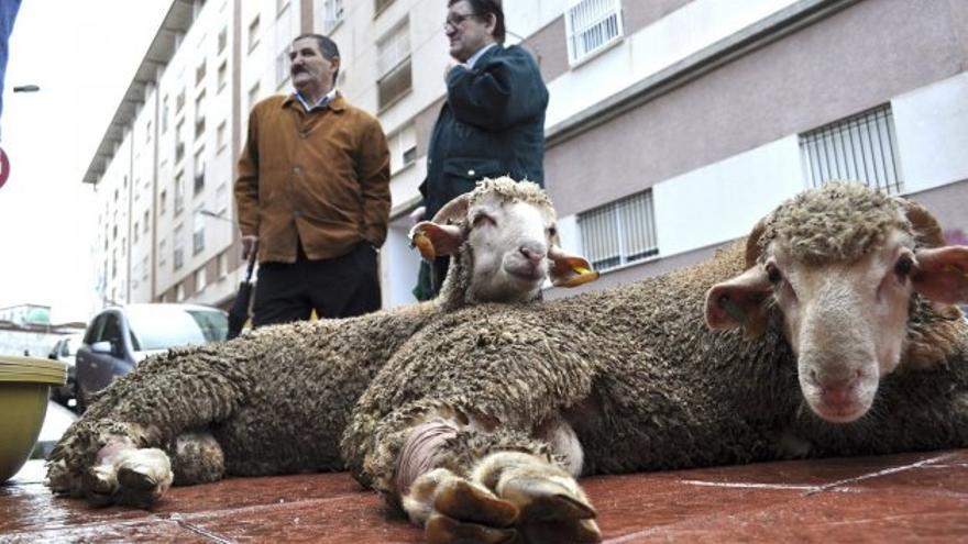 Los musulmanes piden que la Fiesta del Cordero esté en los convenios laborales