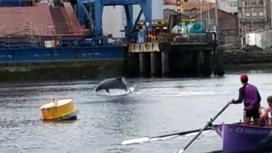 """Una pareja de delfines se marca una """"coreografía"""" en Vigo"""