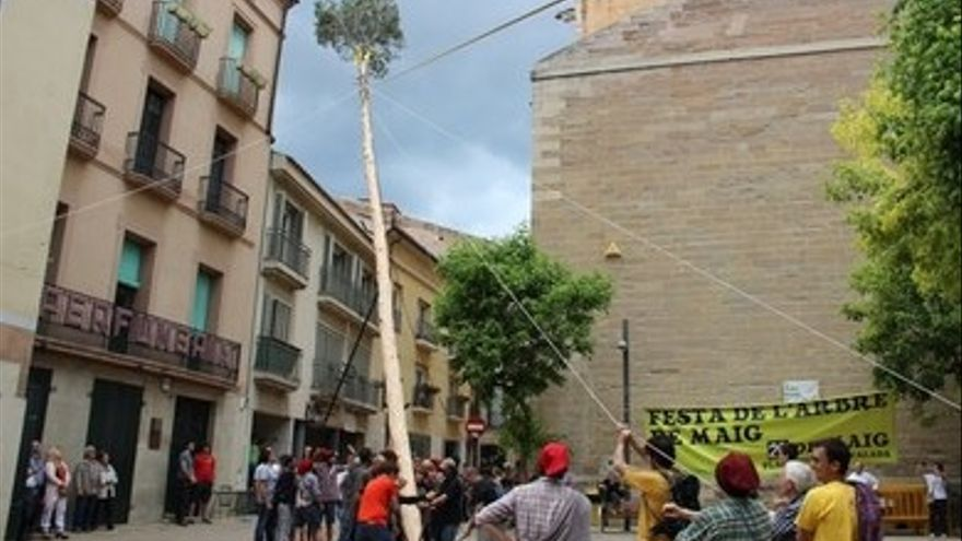IX Festa de l'arbre de maig