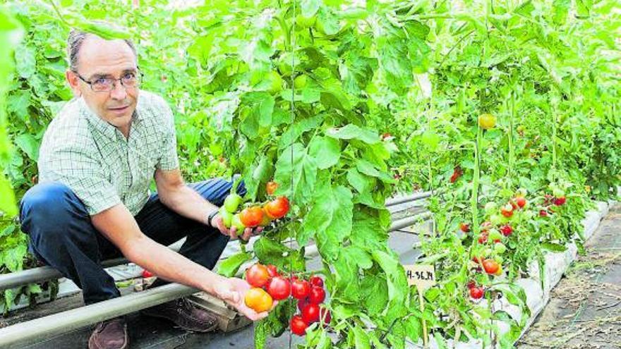 El cambio climático revoluciona los cultivos