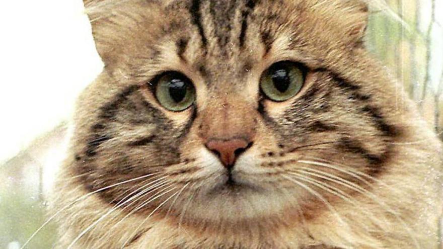 Gatos: ¿Sabes cómo se comunican contigo?