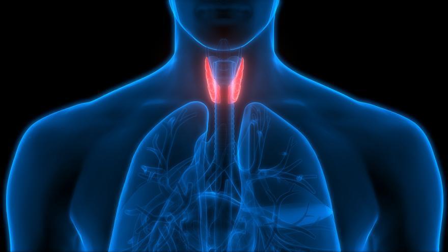 Investigadores españoles desarrollan una técnica para el diagnóstico objetivo y fiable del cáncer de tiroides