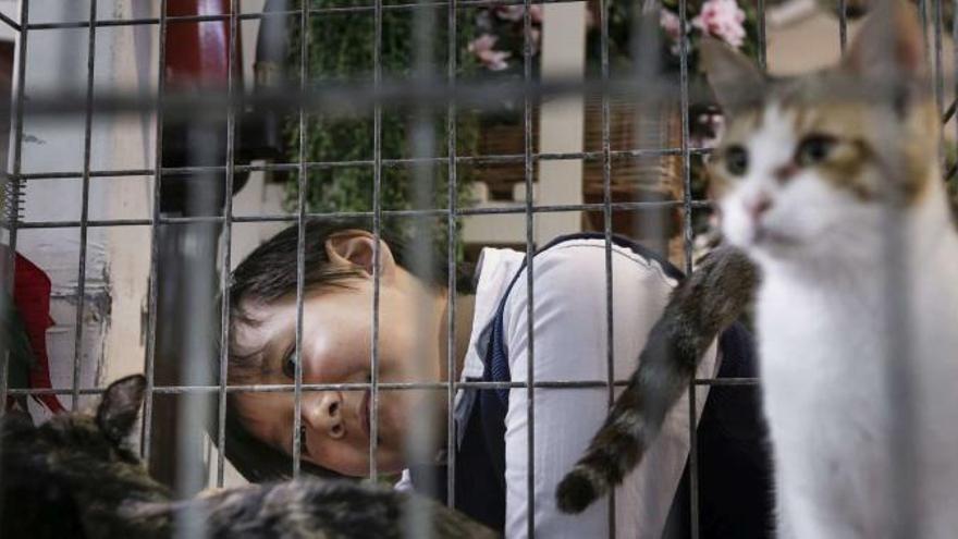 Empresarios veterinarios rechazan la ordenanza de mascotas de Palma
