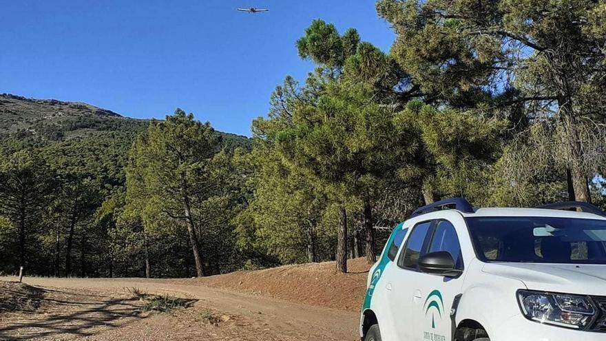 Andalucía inicia tratamientos aéreos para luchar contra la procesionaria del pino