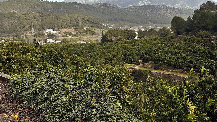 El proyecto para abaratar                   el riego ahorra un 50 %                             al adaptarlo a La Barraca
