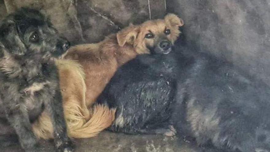 """Rescatan a los perros de la """"finca de los horrores"""" de un municipio de Alicante"""