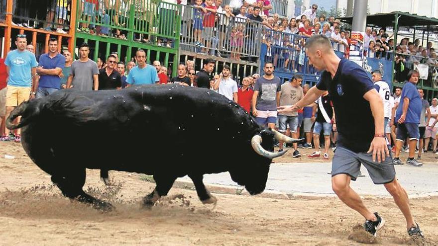 La escapada de dos vacas protagoniza la segunda tarde de actos taurinos de Burriana