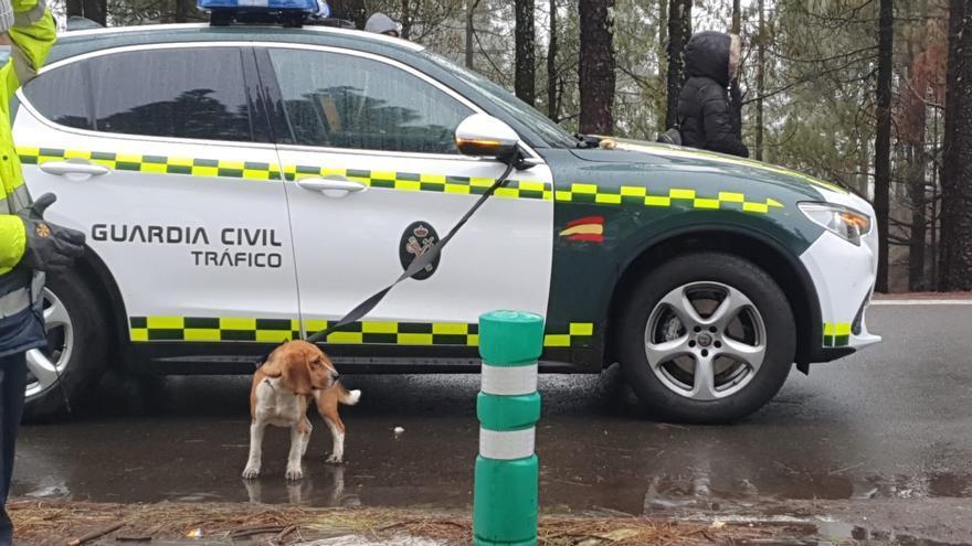 'Rocky', el perro perdido y encontrado este sábado en la cumbre de Gran Canaria